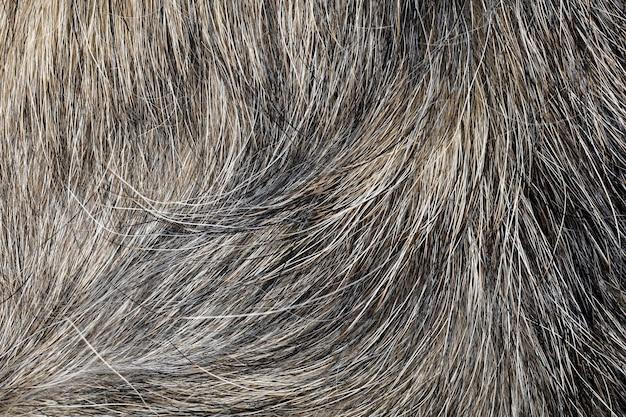 Chiuda sulla pelle grigia del cane per struttura e modello.