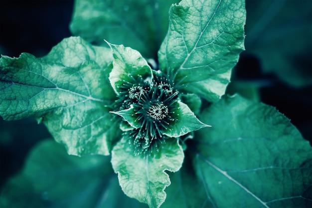 Chiuda sulla pianta di bardana. priorità bassa tonica tendenza modello floreale astratto modello