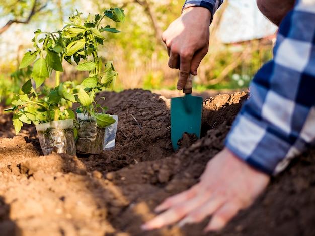 Chiuda sulla piantatura dei semi nel giardino