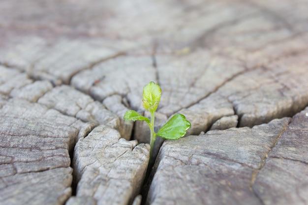 Chiuda sulla piantina che cresce nel tronco centrale come concetto di nuova vita