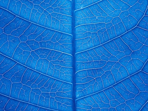 Chiuda sulla struttura della foglia blu