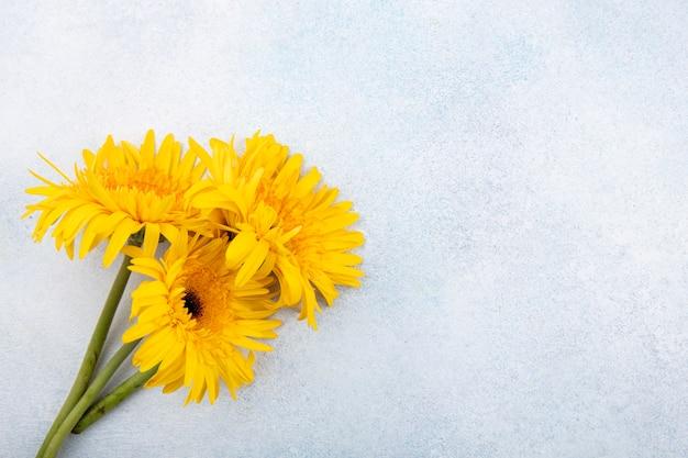 Chiuda sulla vista dei fiori dalla parte di sinistra e dalla superficie bianca