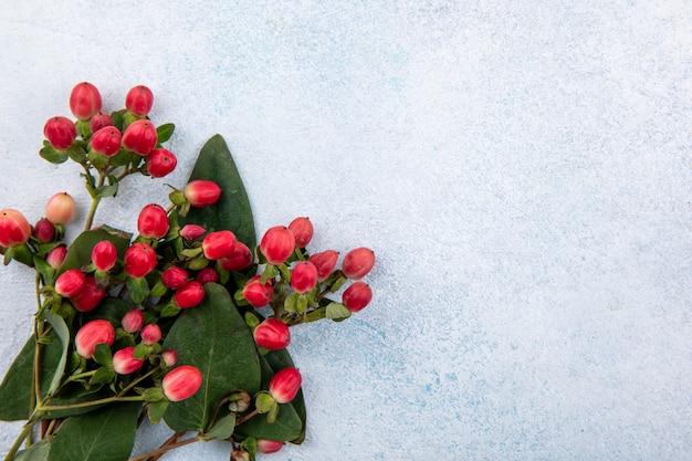 Chiuda sulla vista dei fiori su superficie bianca