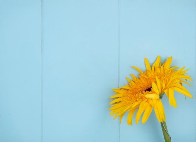 Chiuda sulla vista del fiore dalla destra e dalla superficie del blu
