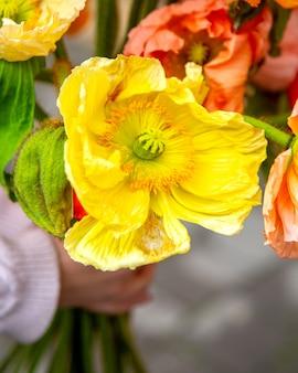 Chiuda sulla vista del mazzo giallo dei fiori dell'anemone