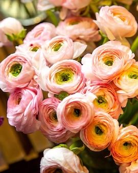 Chiuda sulla vista del mazzo rosa dei fiori del ranunculus