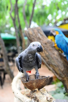 Chiuda sulla vista dell'uccello variopinto del amazon macaw