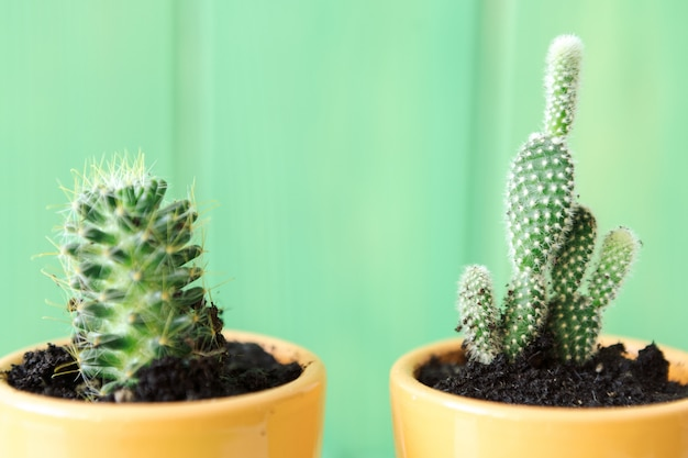 Chiuda sulla vista di un succulente contro di legno verde