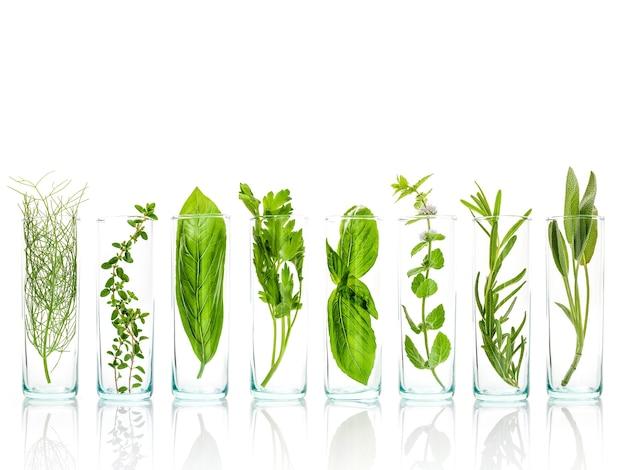 Chiuda sulle bottiglie degli olii essenziali con le erbe fresche isolate su fondo bianco.