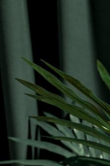 Chiuda sulle foglie della palma