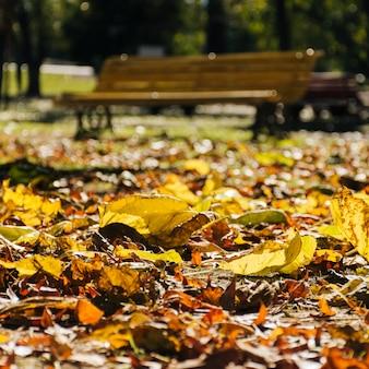 Chiuda sulle foglie di autunno con il fondo vago del parco