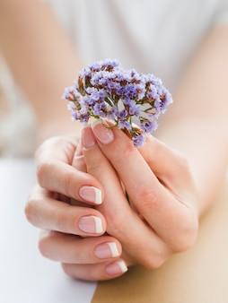 Chiuda sulle mani delicate che tengono i fiori porpora