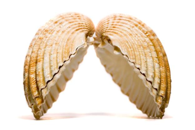 Chiudere il dettaglio di vista di un guscio di cuore isolato su uno sfondo bianco.