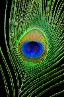 Chiudere l'occhio di pavone
