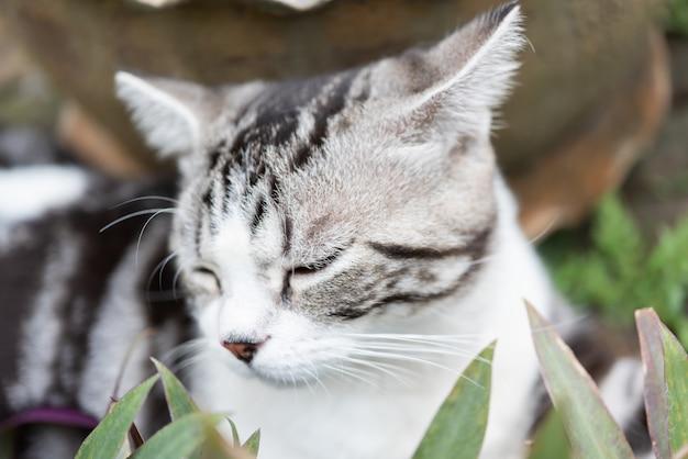 Chiudi gli occhi assonnati del gattino