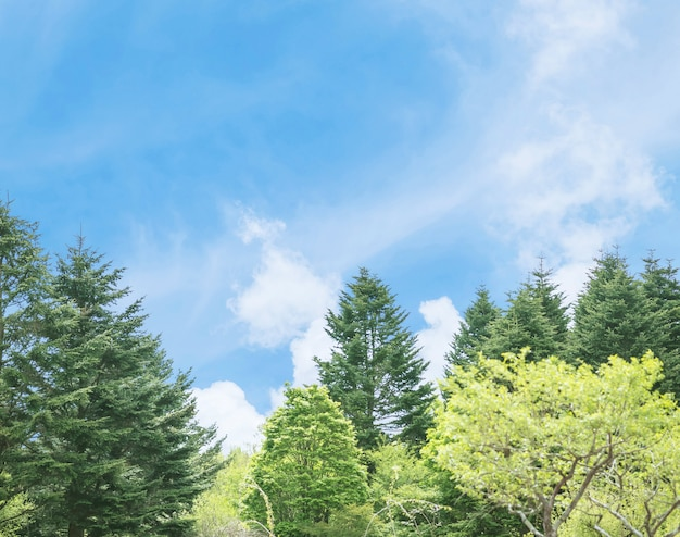 Cielo blu del primo piano con sottilmente nuvola con il fondo verde dell'albero con lo spazio della copia