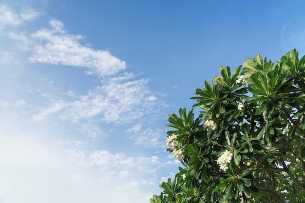 Cielo blu e albero in una giornata di sole. stagione estiva, agosto.