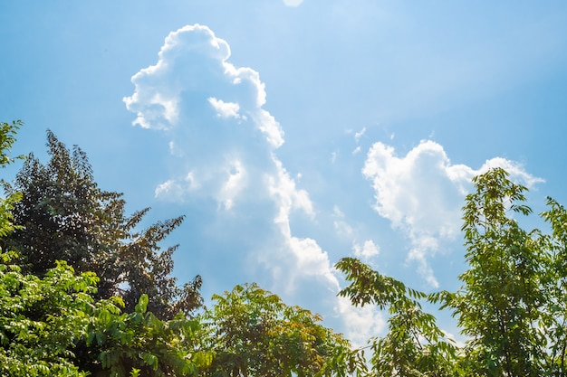 Cielo blu soleggiato con le nuvole molli e il sole luminoso contro la priorità alta verde degli alberi