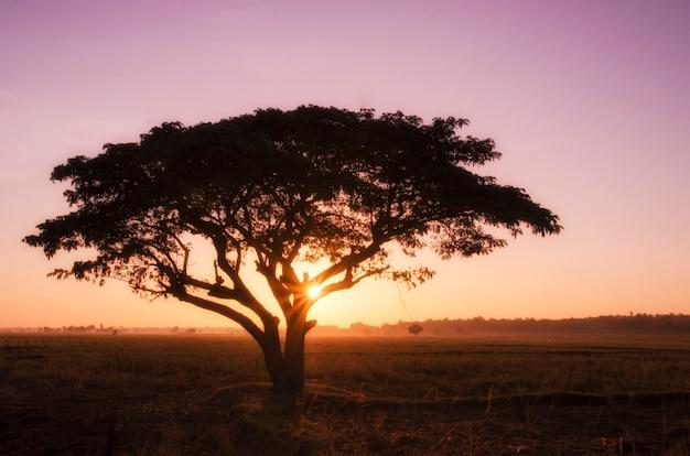 Cielo vibrante del grande paesaggio di alba dell'albero della siluetta