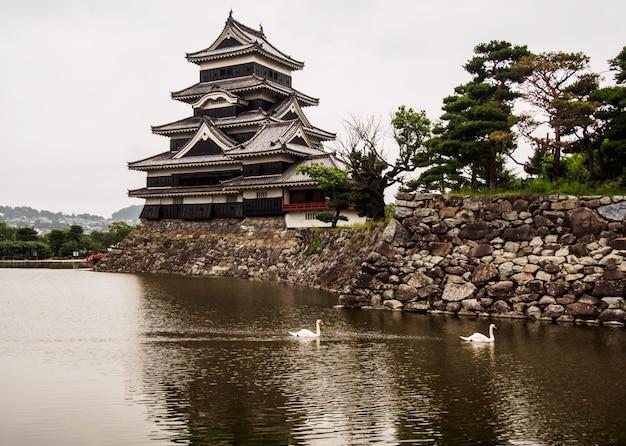 Cigni nel piccolo canale al castello di matsumoto in giappone