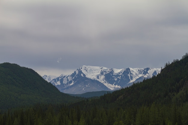 Cima della neve in altai. vista dal basso.
