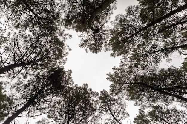 Cime degli alberi d'oro