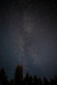 Cime degli alberi sempreverdi con cielo notturno stellato