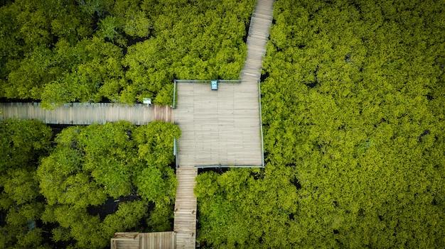 Cinghia delle forcole di intung delle mangrovie o campo dorato delle mangrovie all'estuario pra sae, tailandia