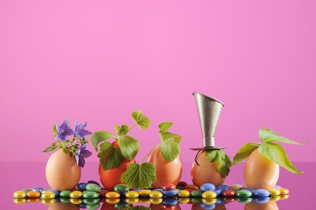 Cinque piante organiche in gusci d'uovo, giardinaggio eco, orizzontale.