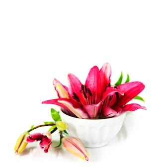 Ciotola di acqua e fiori su uno sfondo bianco
