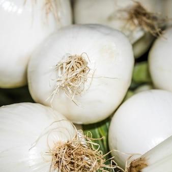 Cipolla fresca verde da vendere sul mercato