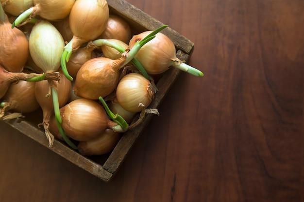Cipolle germogliate in una scatola di legno