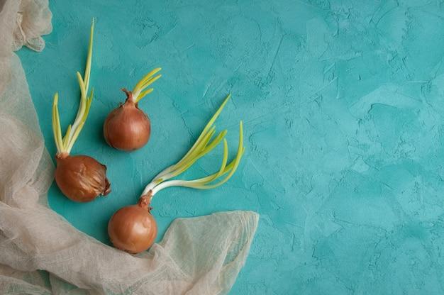 Cipolle germogliate su sfondo turchese.