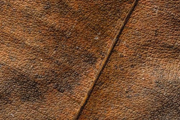 Close up detial di texture marrone foglia secca