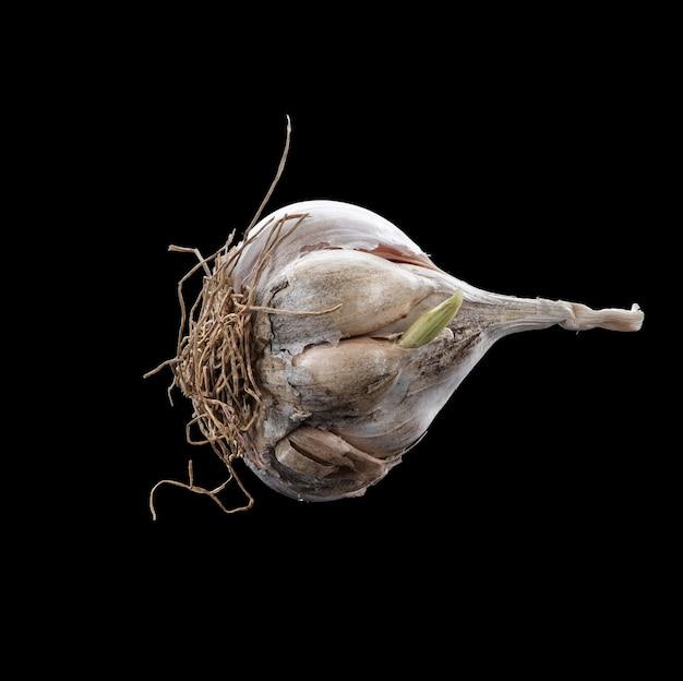 Close-up di aglio su uno sfondo nero. protezione degli alimenti da virus, coronavirus, concetto di immunità