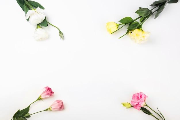 Close-up di fiori sullo sfondo bianco angolo