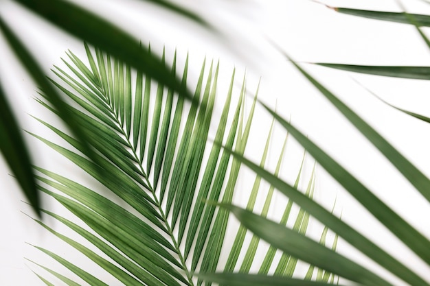 Close-up di foglie di palma verdi