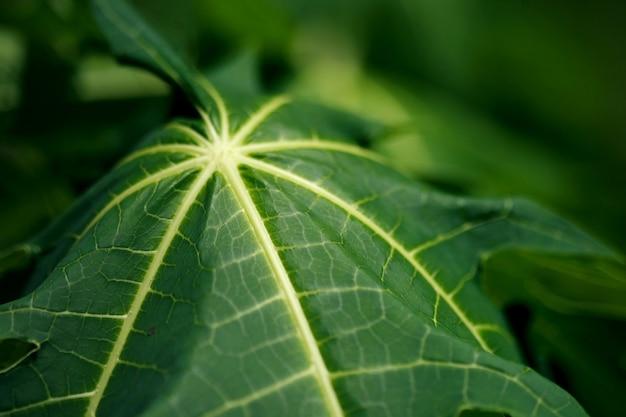 Close-up di foglie nella giungla
