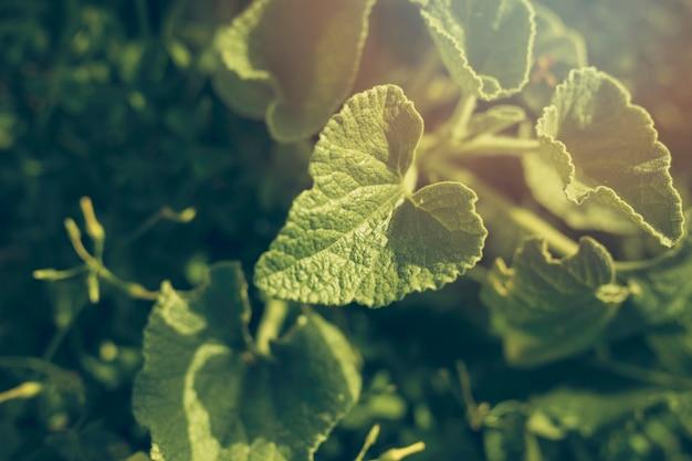 Close-up di foglie verdi