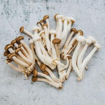 Close-up di funghi sul pavimento