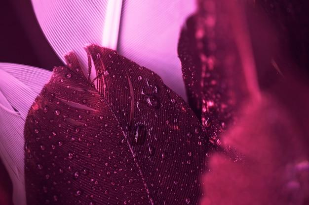 Close-up di gocce d'acqua sulla piuma rosa