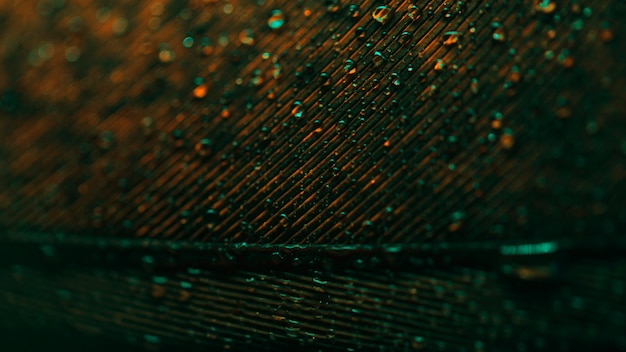 Close-up di piume di pavone con gocce e luci