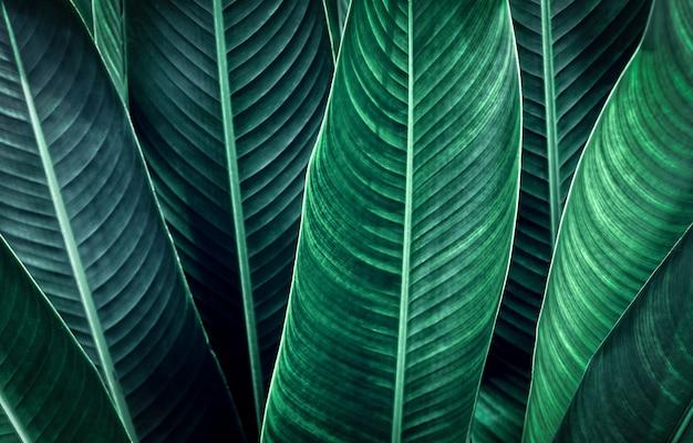 Close-up foglia verde