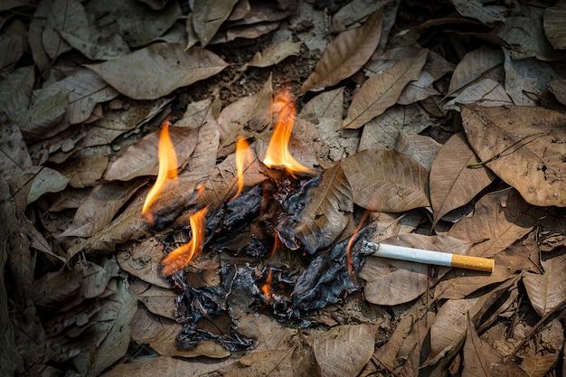 Close up mozzicone di sigaretta non fumato con noncuranza vengono gettati nell'erba secca sul terreno causando un pericoloso incendio boschivo, cotostrophy eclogico attraverso il concetto di colpa umana