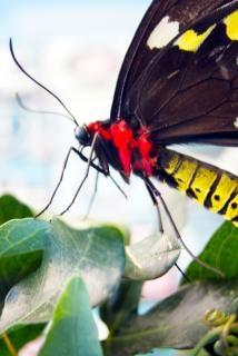 Closeup ali di farfalla