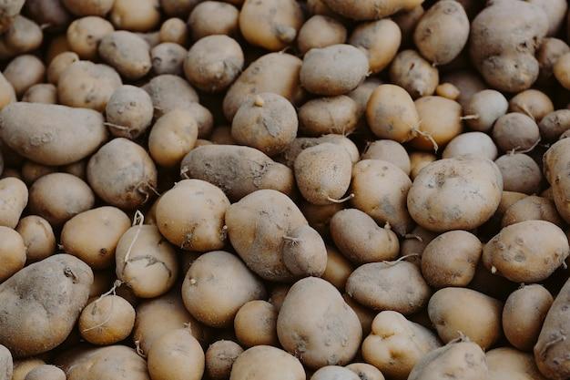 Closeup di patate biologiche fresche