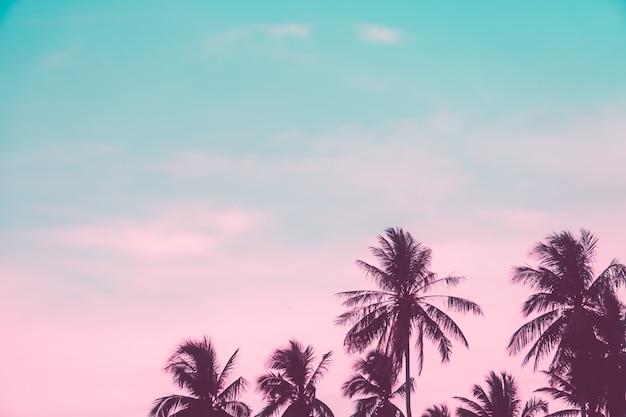 Cocchi tropicali della palma sul chiarore del cielo di tramonto e sulla natura del bokeh.