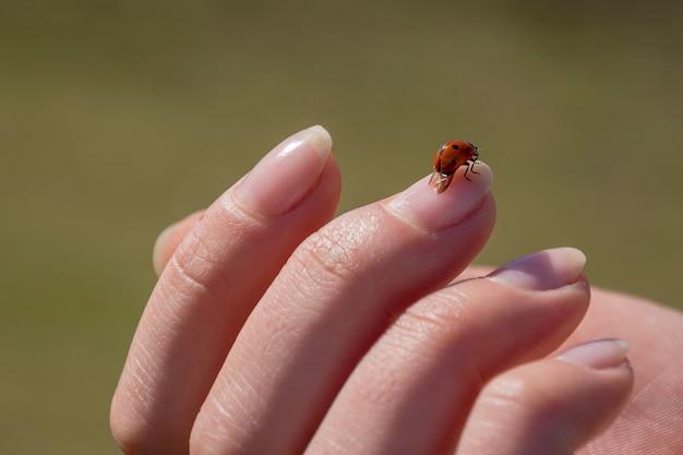 Coccinella piacevole che si siede sul dito della donna