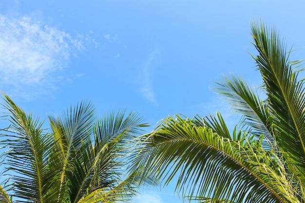 Cocco su cielo blu