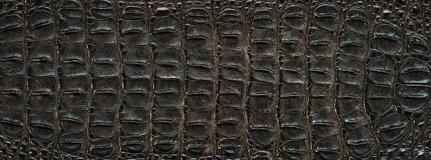 Coccodrillo texture della pelle posteriore